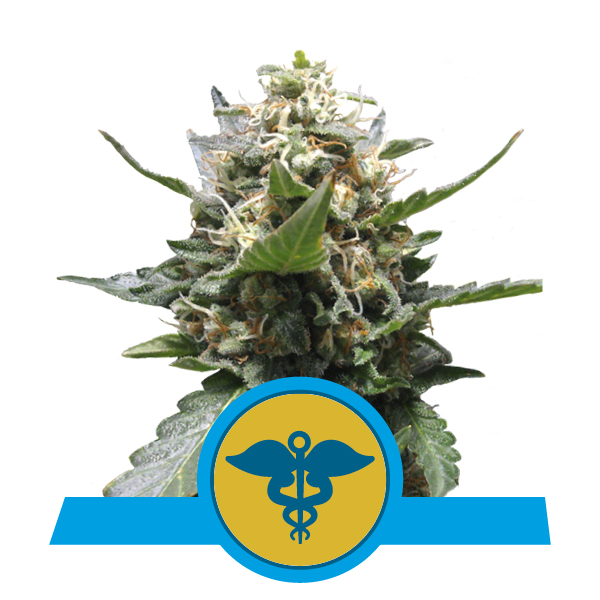 Royal Queen Seeds Royal Medic