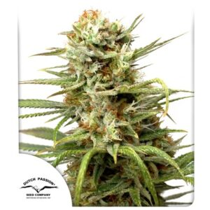 Dutch Passion CBD Auto White Widow®