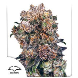Dutch Passion Blueberry ®