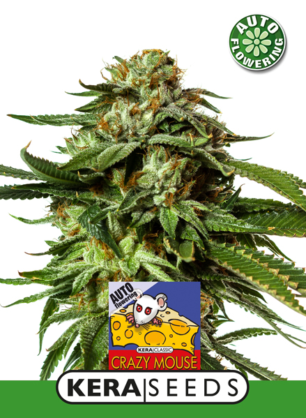 kera crazy mouse auto