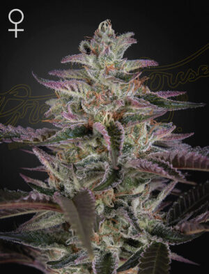 Green House Seeds Banana Krumble