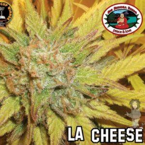 Big Buddha La Cheese gefeminiseerde zaden